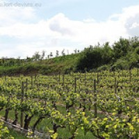 Weingüterhopping im Rioja – Mai 2010