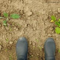Die Gartensaison 2013 ist eröffnet!