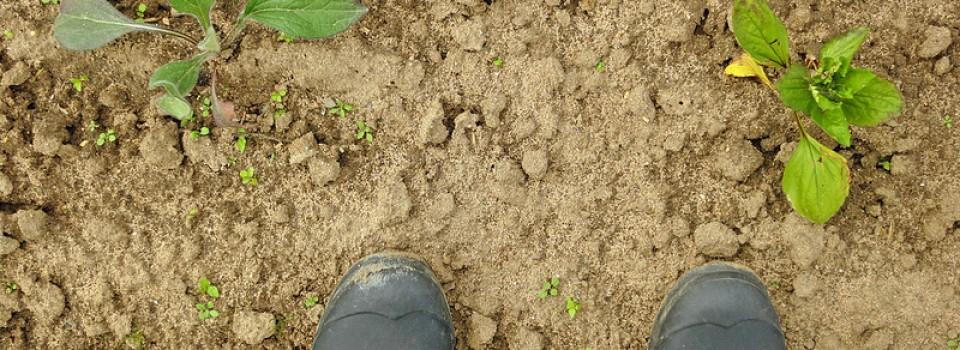 Gartensaison 2013